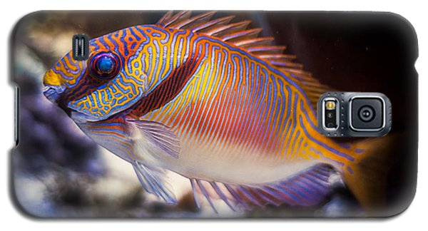 Rabbitfish Galaxy S5 Case