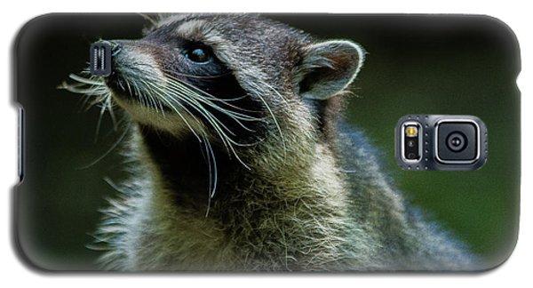 Raccoon 1 Galaxy S5 Case