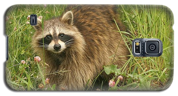 Galaxy S5 Case featuring the photograph Raccoon  by Doris Potter