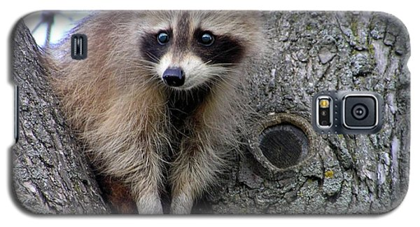 Raccoon Lookout Galaxy S5 Case