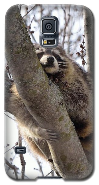 Afternoon Nap-raccoon Up A Tree  Galaxy S5 Case