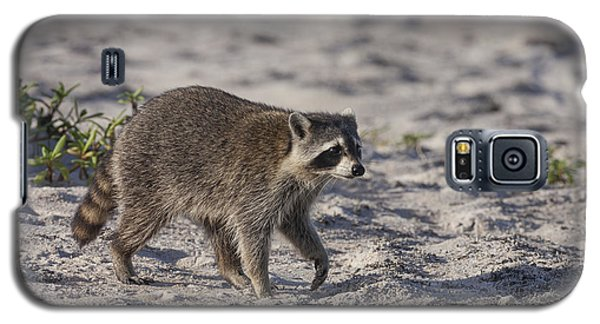 Raccoon On The Beach Galaxy S5 Case