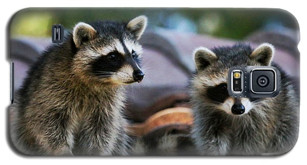 Racoons On The Roof Galaxy S5 Case by Dorothy Cunningham