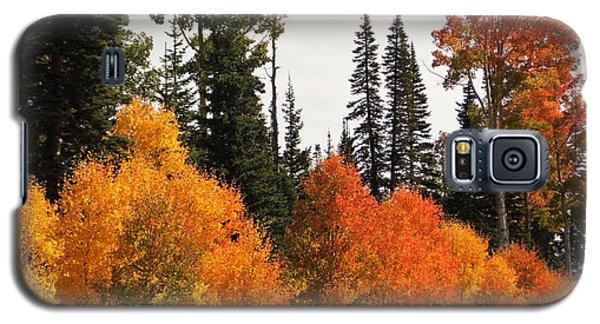 Galaxy S5 Case featuring the photograph Radiant Autumnal Forest by Deborah Moen