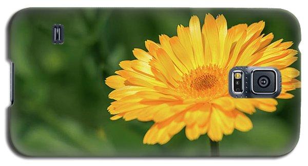 Radiant Summer Flower Soaking It Up Galaxy S5 Case