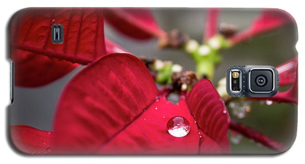 Rain Drop On A Poinsettia  Galaxy S5 Case