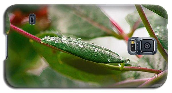Rain Drops On A Leaf Galaxy S5 Case