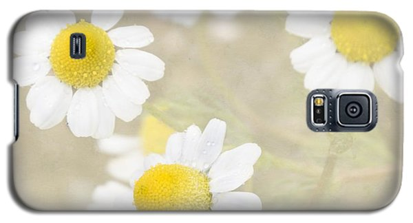 Rain-kissed Chamomile Galaxy S5 Case by Cindy Garber Iverson