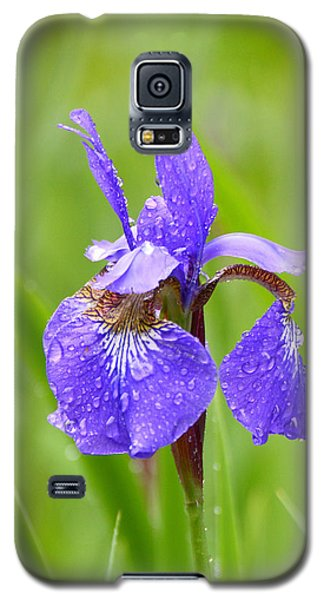 Rain Kissed Galaxy S5 Case by Lila Fisher-Wenzel