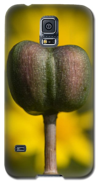 Rain-lily Capsule And Four-nerve Daisies Galaxy S5 Case