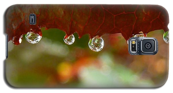 Raindrops On A Red Leaf Galaxy S5 Case