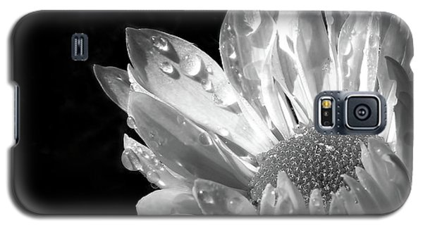 Raindrops On Daisy Black And White Galaxy S5 Case