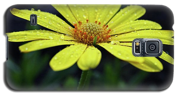 Galaxy S5 Case featuring the photograph Raindrops On Daisy by Judy Vincent