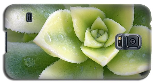 Galaxy S5 Case featuring the photograph Raindrops On The Succulent by Elvira Butler