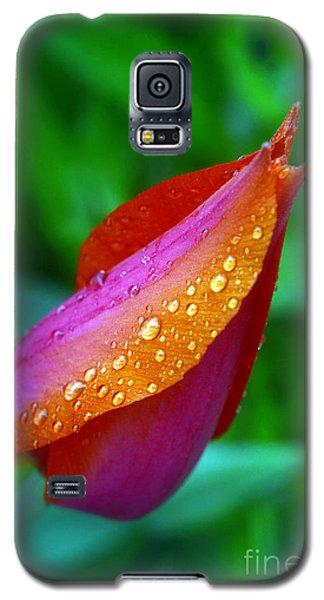 Raindrops On Tulip Galaxy S5 Case