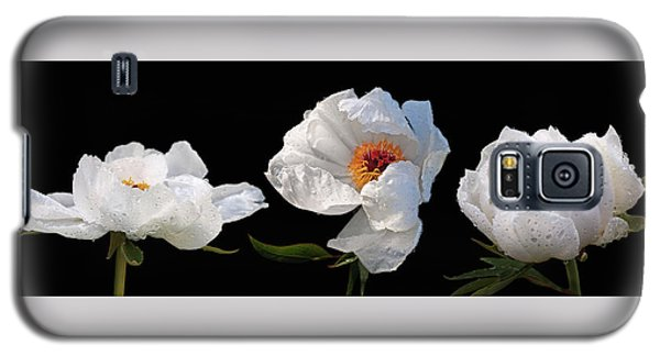 Raindrops On White Peonies Panoramic Galaxy S5 Case by Gill Billington