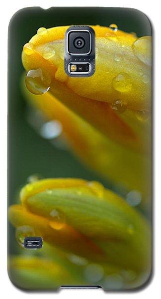 Raindrops Galaxy S5 Case by Rachel Mirror