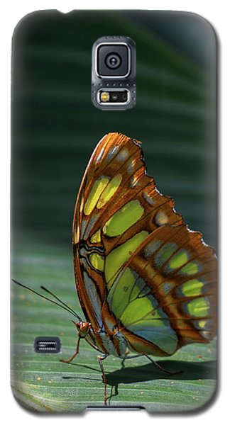 Rainforest Butterfly Galaxy S5 Case