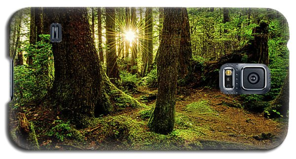 Sunset Galaxy S5 Case - Rainforest Path by Chad Dutson