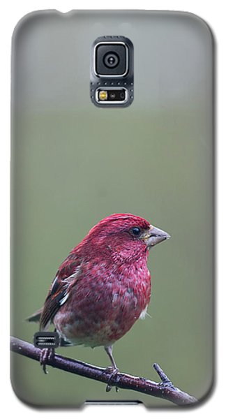 Galaxy S5 Case featuring the photograph Rainy Day Finch by Susan Capuano