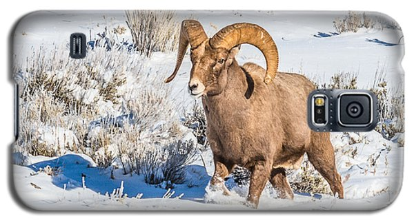 Galaxy S5 Case featuring the photograph Ram In Rut by Yeates Photography