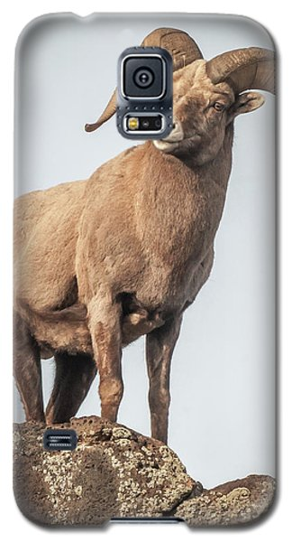Galaxy S5 Case featuring the photograph Ram Of The Rio Grande by Britt Runyon
