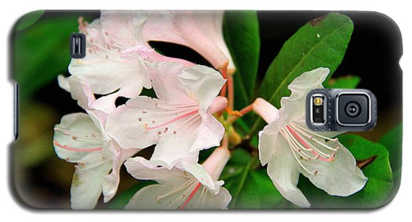 Rare Florida Beauty - Chapmans Rhododendron Galaxy S5 Case by Barbara Bowen