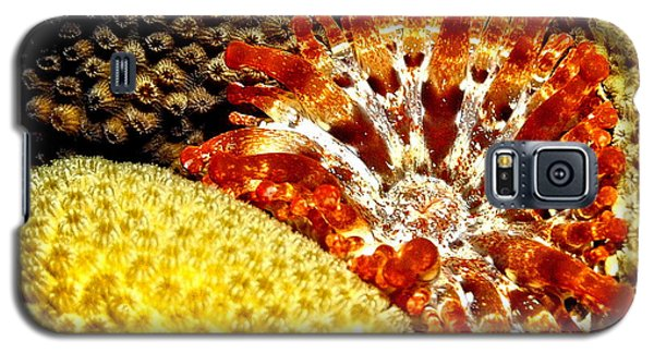 Galaxy S5 Case featuring the photograph Rare Orange Tipped Corallimorph - Fire In The Sea by Amy McDaniel