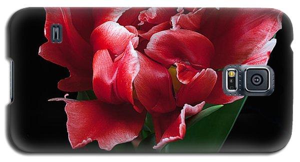 Rare Tulip Willemsoord  Galaxy S5 Case