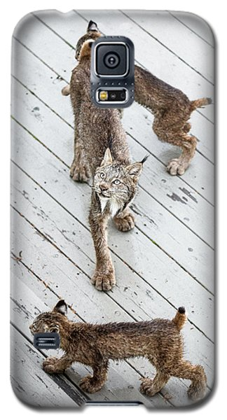 Always Scanning Galaxy S5 Case