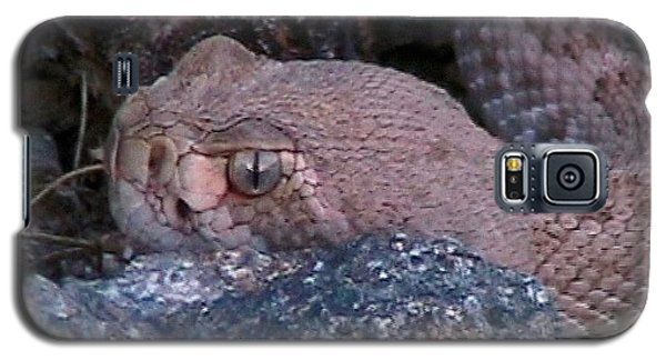 Rattlesnake Portrait Galaxy S5 Case