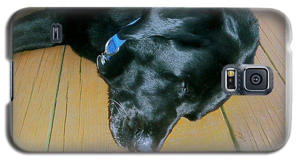 Raven Resting Galaxy S5 Case
