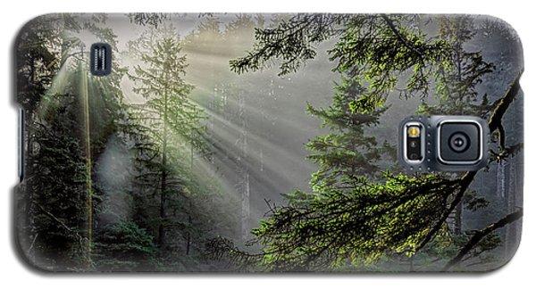 Morning Rays Through An Oregon Rain Forest Galaxy S5 Case