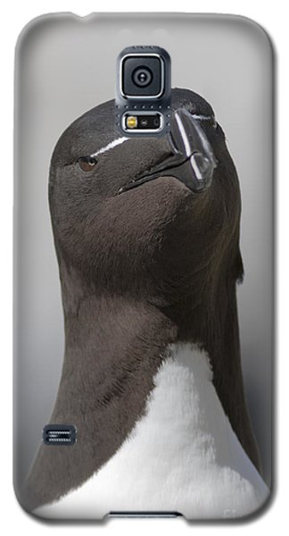 Razorbill Galaxy S5 Case