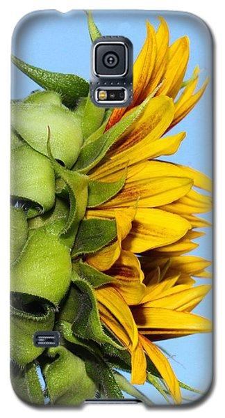 Reaching Sunflower Galaxy S5 Case