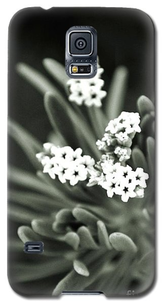 Reaching Out Galaxy S5 Case by Darla Wood
