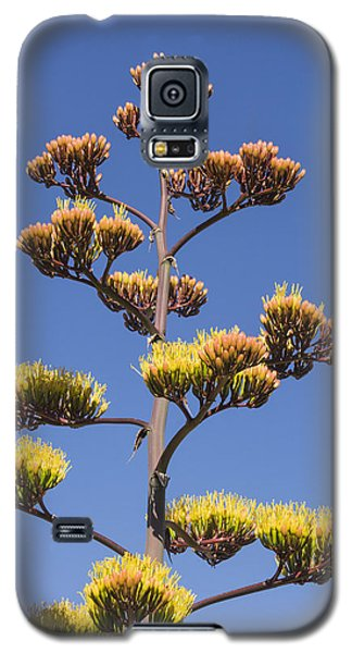 Reaching To The Sky Galaxy S5 Case