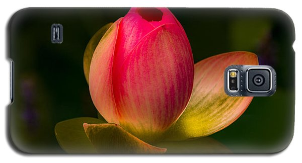 Ready To Bloom Galaxy S5 Case by Jay Stockhaus