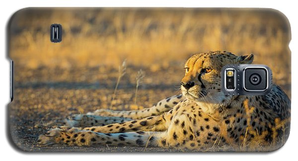 Reclining Cheetah Galaxy S5 Case by Inge Johnsson