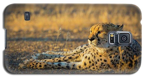 Reclining Cheetah Galaxy S5 Case by Inge Johnsson
