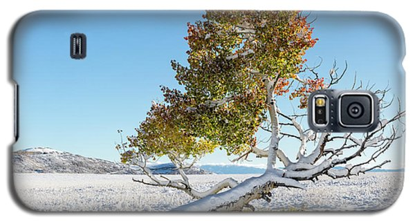 Reclining Tree With Snow Galaxy S5 Case