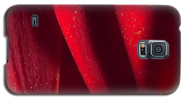 Golden Pollen Red Chrysanthemum Galaxy S5 Case