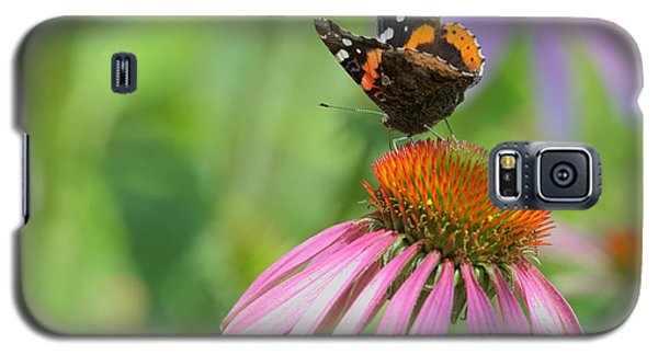 Red Admiral On Cone Flower Galaxy S5 Case