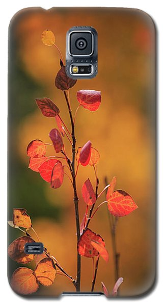 Galaxy S5 Case featuring the photograph Red And Gold by David Chandler