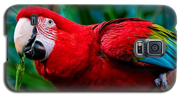 Red And Green Macaw Galaxy S5 Case