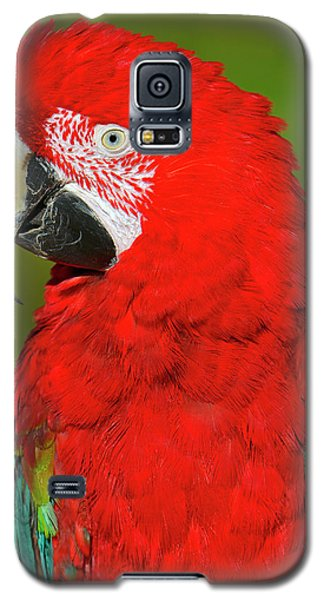 Galaxy S5 Case featuring the photograph Red And Green by Tony Beck