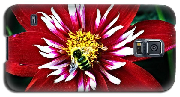Red And White Flower With Bee Galaxy S5 Case