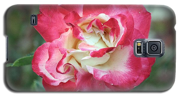 Red And White Rose Galaxy S5 Case