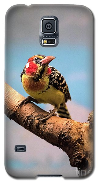 Red And Yellow Barbet Galaxy S5 Case