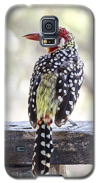 Red-and-yellow Barbet Galaxy S5 Case by Pravine Chester